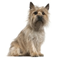 Dog Breeds From Scotland