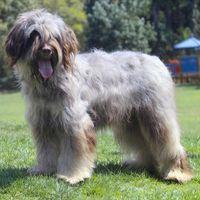 Dog breeds - list of all dog breeds